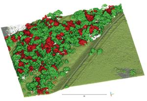 Przykład działania algorytmu OPEGIEKA Elbląg i SGGW, który pozwala identyfikować klon jesionolistny  (kolor czerwony) w gęstej chmurze punktów ALS