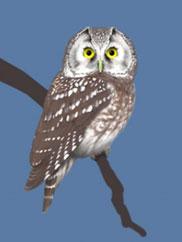 Warsztaty ornitologiczne z GIS i GPS