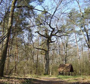Wielkopolskie lasy zamawiają ortofoto <br /> fot. JK