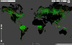 Deforestacja w najwyższej rozdzielczości