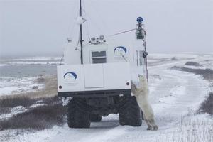 Śladami niedźwiedzi polarnych na Mapach Google