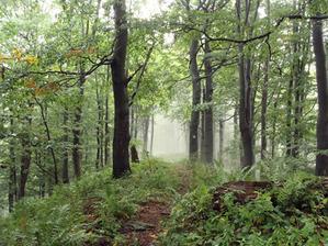 GIS w praktyce: mapy numeryczne w zarządzaniu lasami <br /> fot. JK