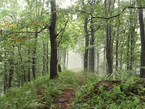 Kto opracuje ortofotomapę dla Lasów Państwowych? <br /> fot. JK