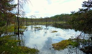 Kto dostarczy bazę danych granic obszarów chronionych? <br /> Mazowiecki Park Krajobrazowy (fot. Wikipedia/Lysy)
