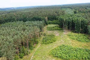 RDLP w Toruniu kupuje drony <br /> fot. Henryk Kapusta (RDLP w Toruniu)