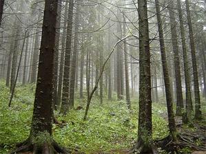 Leśnicy zamawiają sprzęt pomiarowy