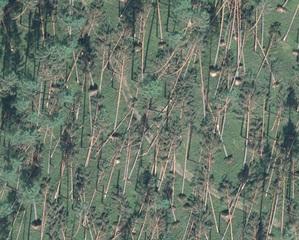 Tych lasów już nie ma <br /> Zniszczenia drzewostanów w Nadleśnictwie Bytów na zdjęciu lotniczym (Źródło: RDLP w Szczecinku)