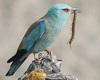 Zaproszenie na seminarium dla ornitologów o zastosowaniu narzędzi GIS