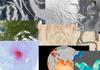 NASA ogłasza satelitarny turniej