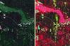 Skutki huraganu z satelity Sentinel-2