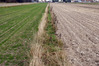 Kto może być gleboznawcą? Minister rolnictwa przyznaje rację RPO