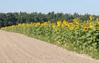 RPO znów interweniuje ws. gleboznawczej klasyfikacji gruntów