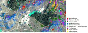 Nowoczesna teledetekcja wsparciem dla monitoringu środowiska <br /> Mapa gatunków sukcesji (oprac. A. Radecka, K. Osińska-Skotak)