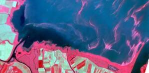 Zakwit sinic okiem konstelacji Planet Scope <br /> Zalew Wiślany, 19 lipca, kompozycja CIR