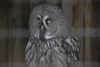 <b class=pic_title>XIII Podlaskie Forum GIS</b> <br /> <br /> <b class=pic_description>III dzień Forum ? Ogród leśny ?Silvarium? w Poczopku</b> <br /> <br /> <b class=pic_author>fot.  Damian Czekaj</b><br /> <br />