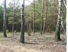 Trybunał Konstytucyjny rozpozna wniosek dotyczący sporządzenia planu urządzenia lasu