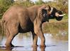 Oprogramowanie do badań afrykańskich słoni