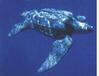 Żółwie monitorowane satelitarnie