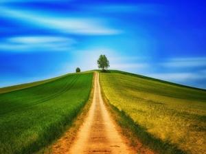 NIK: gleboznawcza klasyfikacja gruntów w dużej mierze fikcją <br /> fot. Pixabay