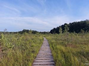Lasy Państwowe zamawiają teledetekcyjną inwentaryzację przyrodniczą <br /> zdjęcie ilustracyjne