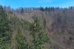 Lidar pomógł wskazać nowe najwyższe drzewo w kraju <br /> fot. MGGP Aero