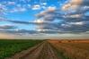 Zapowiedź wideokonferencji nt. gleboznawczej klasyfikacji gruntów