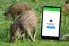 """Aplikacja """"Zgłoś dzika"""" w obronie dziko żyjących zwierząt"""