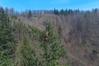 Lidar pomógł wskazać nowe najwyższe drzewo w kraju